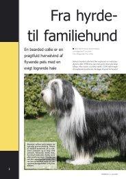 Bearded collie - Hunden