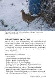 Stödutfodring av vilt - Svenska Jägareförbundet - Page 7