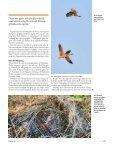 klicka här: (pdf-fil) - Page 4