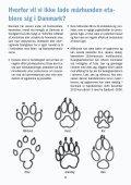 Mårhunden spreder sig i Danmark – hjælp med at bekæmpe den! - Page 2