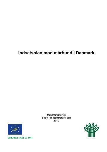 Indsatsplan mod mårhund i Danmark