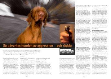 Så påverkas hunden av aggression och rädsla