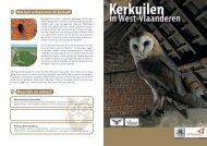 Kerkuilen - Provincie West-Vlaanderen