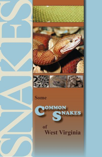 Some Common Snakes in WV - West Virginia Department of ...