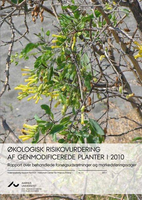 Økologisk risikovurdering af genmodificerede planter i 2010
