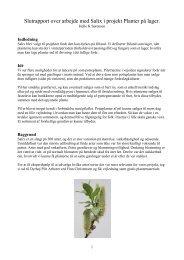 Rapport over arbejde med Salix i projekt Planter p lager