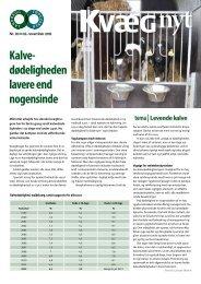 Levende kalve - Videncentret for Landbrug