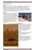 Turen går dybt ind i de finske skove tæt ved den russiske ... - Scanbird - Page 4