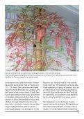 NIWAs planteforslag - Foreningen Japanske Haver - Page 5