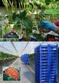 Aardbeien als afrodisiacum - Marcel Dings - Page 2