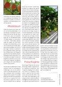 Aardbeien als afrodisiacum - Marcel Dings - Page 4