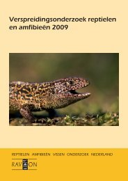 Verspreidingsonderzoek reptielen en amfibieën 2009