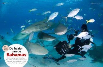 Bahamas - SharkSchool