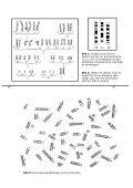Gör en karyotyp - Page 2
