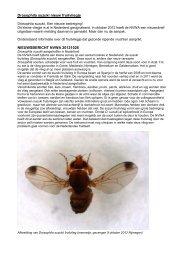 Drosophila suzuki nieuw fruitvliegje NIEUWSBERICHT ... - DLV Plant