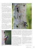 Fågelvännen nr 3/2012 - Hans Falklind - Page 2
