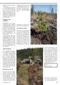 pdf 2,7 MB - Skogsbruket - Page 7
