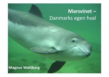 Marsvinet – Danmarks egen hval - Unge Talenter Region Syd