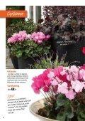 Nyhet! - Skinnarnas Blommor & Trädgård - Page 2