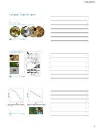 Honingbijen beschermen zichzelf (pdf)