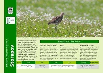 Storspov - Sveriges Ornitologiska Förening