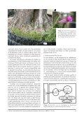 een inleiding tot de containerfloristiek - Nationale Plantentuin van ... - Page 5