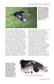 witte veren - eksters & zo - Page 3