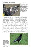 witte veren - eksters & zo - Page 4