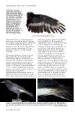witte veren - eksters & zo - Page 6