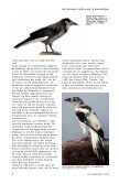 witte veren - eksters & zo - Page 7