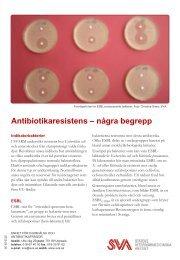 Informationsblad begrepp (pdf) - SVA