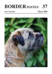 BORDERPOSTEN 37 - Border terriers i DTK