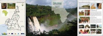Cameroun Kameroen - Terre d'Afrique