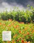 Ola Aukrust odlar biodynamiska grönsaker och örter på sin gård i ... - Page 4