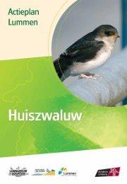 Lummen - huiszwaluw - Provincie Limburg
