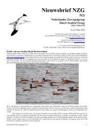 Nieuwsbrief NZG 5(2) - Nederlandse Zeevogelgroep