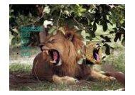 Microsoft PowerPoint - løve