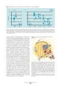 Thema: Borrelia Malariaonderzoek in Mali Het genoom ligt ... - NVMM - Page 7