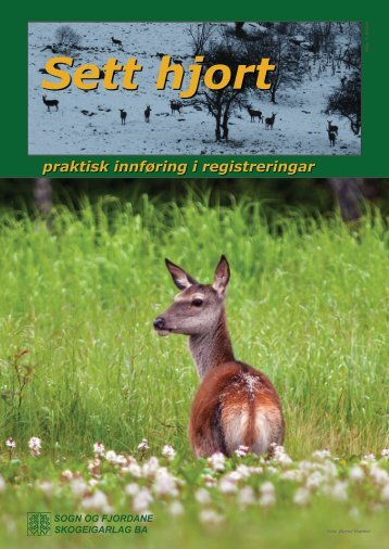 Sett hjort - Sogn og Fjordane Skogeigarlag