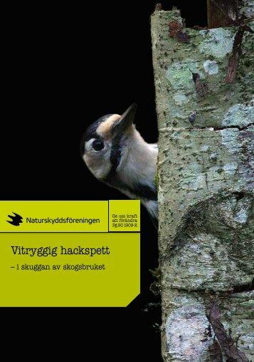 Broschyr: Vitryggig hackspett - Naturskyddsföreningen