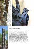Broschyr: Vitryggig hackspett - Naturskyddsföreningen - Page 3