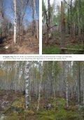 Broschyr: Vitryggig hackspett - Naturskyddsföreningen - Page 4