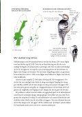Broschyr: Vitryggig hackspett - Naturskyddsföreningen - Page 5