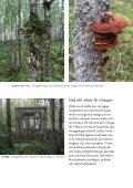 Broschyr: Vitryggig hackspett - Naturskyddsföreningen - Page 7