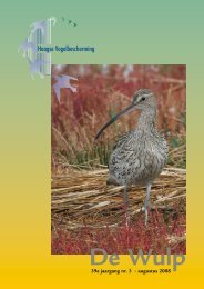 Augustus 2008 - Haagse Vogelbescherming