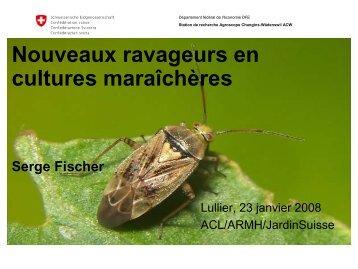 Nouveaux ravageurs en cultures maraîchères Serge ... - ACL Lullier