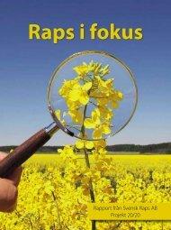 Rapport från Svensk Raps AB Projekt 20/20 - Rapsi.fi