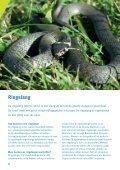 10 Ringslang een bijzondere bewoner van Gouda - Cyclus NV - Page 4