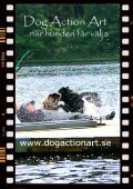 skallet 0701.p65 - Kind Brukshundklubb - Page 7