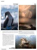 Havsleguaner - Kamera & Bild - Page 3